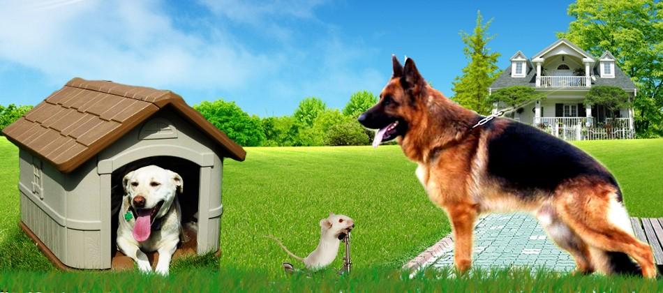 Ground Pets